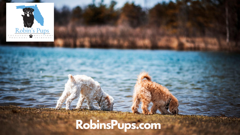 robins_pups.png