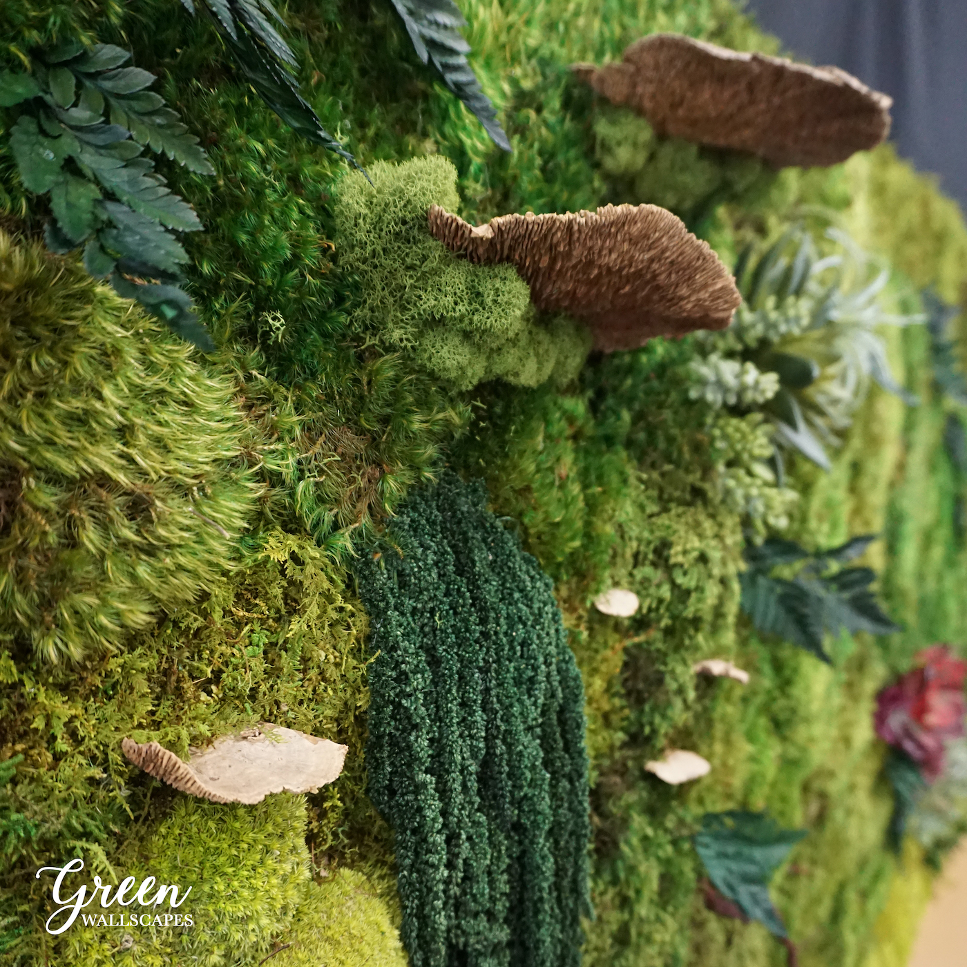 mushroom_close_up.jpg