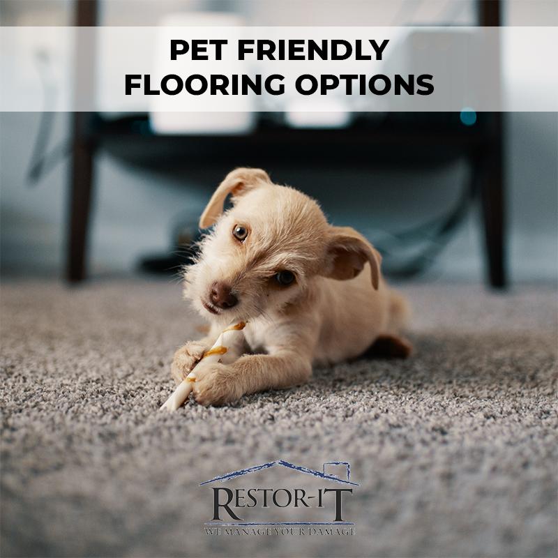 pet_friendly_carpet.jpg