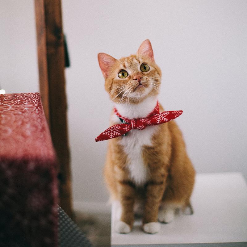 cat_herders.jpg