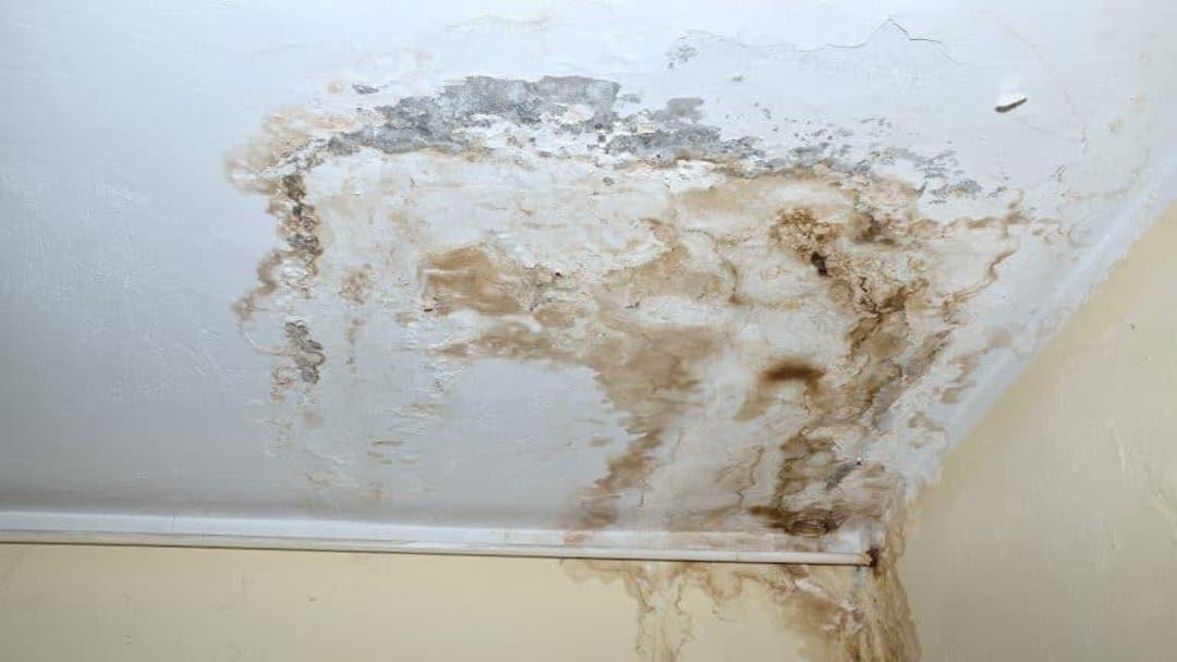 mold_-_ceiling_damage_-_roof_repair_.jpg