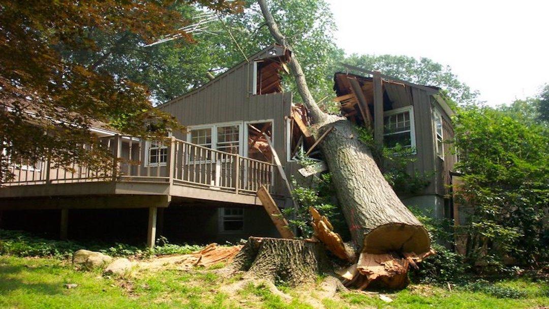 roof_repair__tree_on_roof__freeman_roofing.jpg