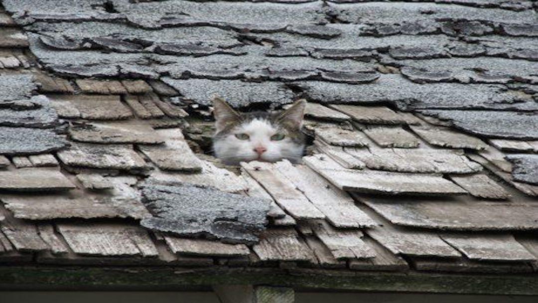 old_roof__roof_repair__roofing_company.jpg