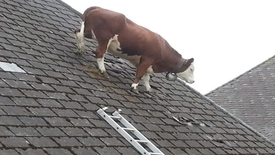 roof_repair__roof_contractor.jpg