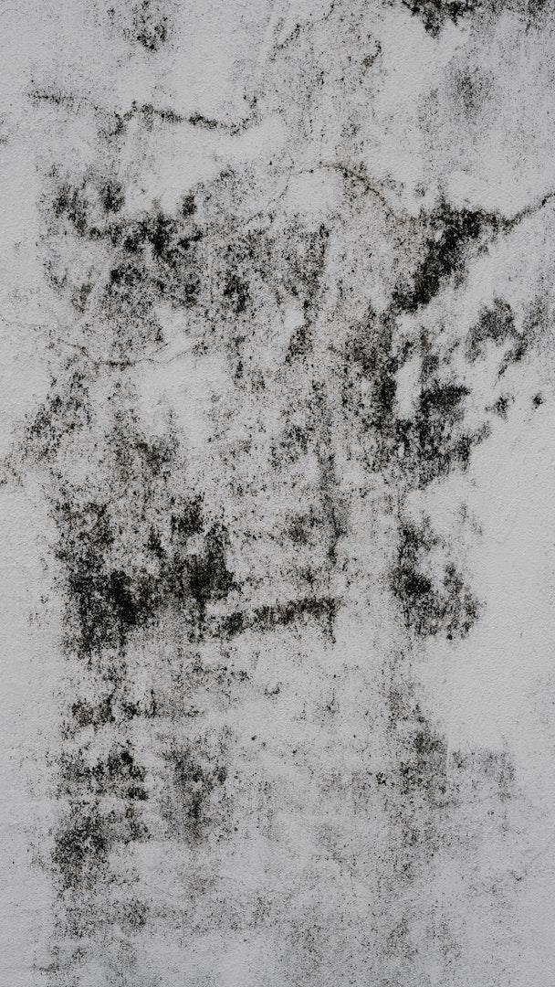 molded_wall__water_damage__servpro_of_west_pensacola__1101_s._fairfield_dr_pensacola__fl._32506_850-469-1160_https-::bit.ly:36jv0ta__.jpg
