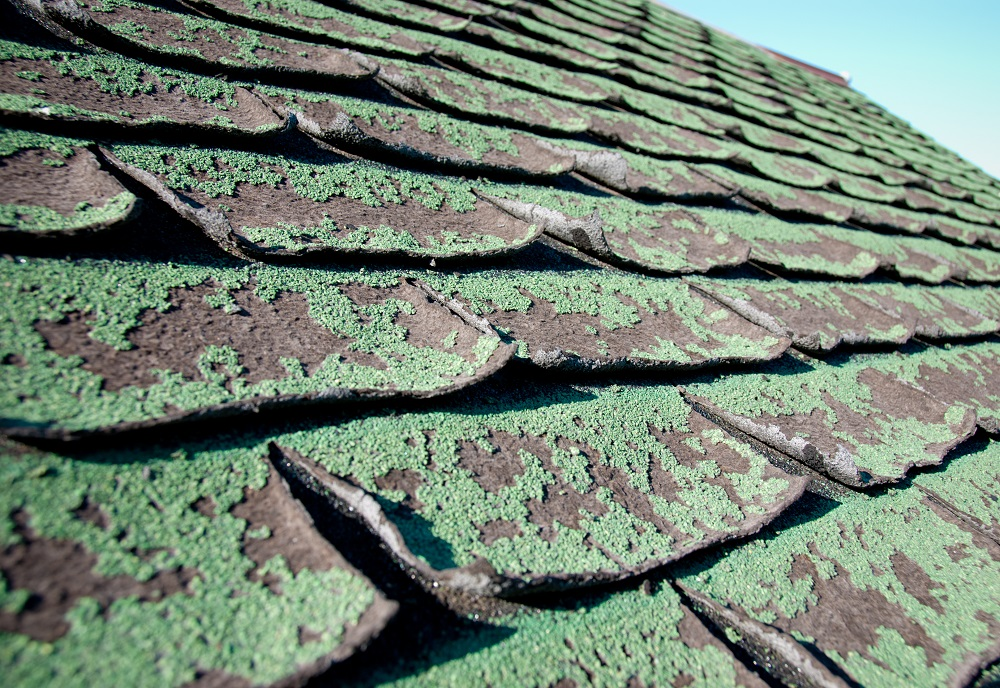 really_old_shingles_with_mold__freeman_roofing_4201_auckland_pace__fl_32571_(850)_994-1078__http-:www.freemanroofing.com.jpg
