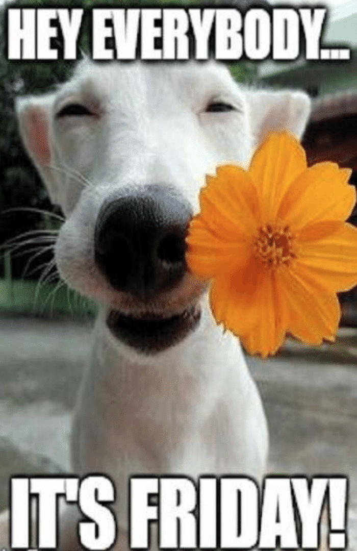 dog_with_flower__gutter_solutions_and_home_improvements__www.seamlessgutterspensacola.com_(850)_776-1782.png