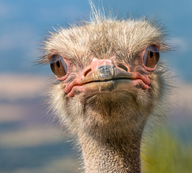 confused_ostrich__gutter_solutions_and_home_improvements_https-::bit.ly:3jywyst__(850)_776-1782.png
