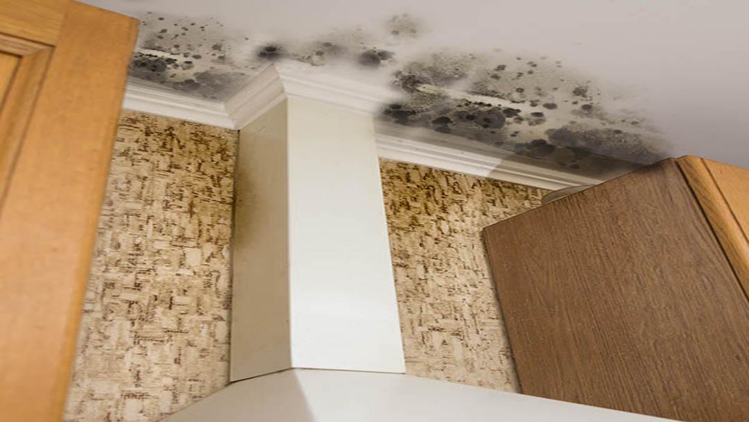 mold_on_ceiling_of_kitchen__servpro_of_west_pensacola_1101_s._fairfield_dr_pensacola__fl._32506_850-469-1160_https-::g.page:servproofwestpensacola?share.jpg