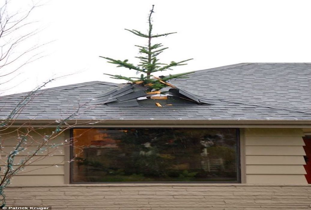 tree_through_roof__roof_repair__shingle_repair_freeman_roofing_4201_auckland_pace__fl_32571_(850)_994-1078__https-::g.page:pensacola-roof-repair?share.jpg
