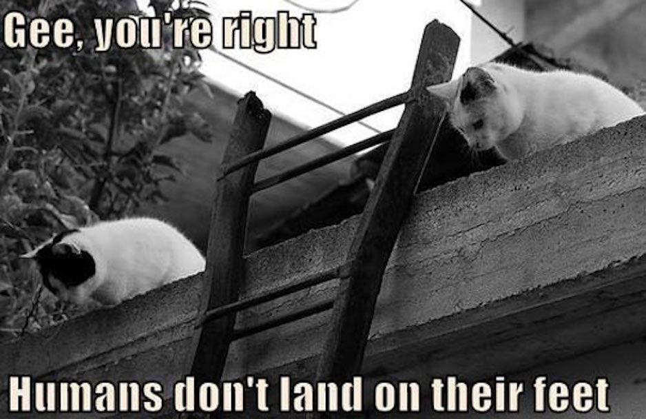 cats_on_roof_with_ladder__gutter_solutions_and_home_improvements_https-::g.page:guttersolutionshomeimprovements?share_(850)_776-1782.jpg