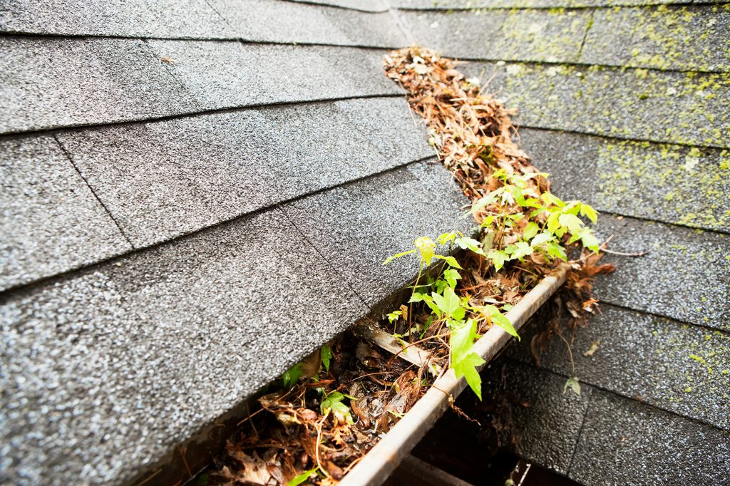 gutters_that_are_full_of_leaves_and_growth__gutter_solutions_and_home_improvements_https-::g.page:guttersolutionshomeimprovements?share_(850)_776-1782_.jpg