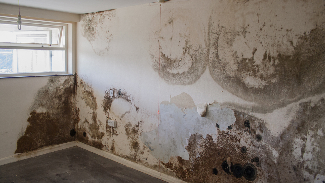 room_with_terrible_mold__servpro_of_west_pensacola_1101_s._fairfield_dr_pensacola__fl._32506_850-469-1160_https-::g.page:servproofwestpensacola?share__.jpg