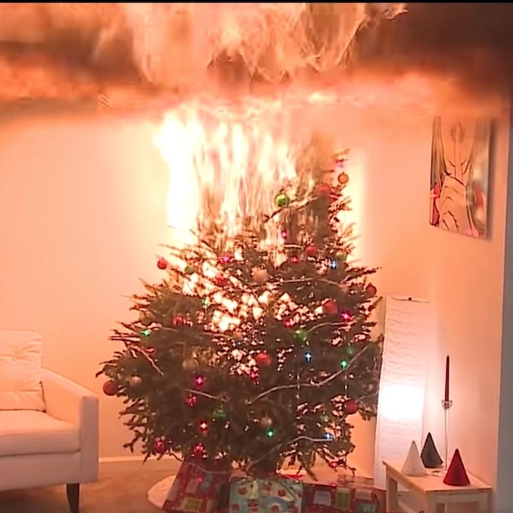 burning_tree__servpro_of_west_pensacola_1101_s._fairfield_dr_pensacola__fl._32506_850-469-1160_https-::g.page:servproofwestpensacola?share.jpg