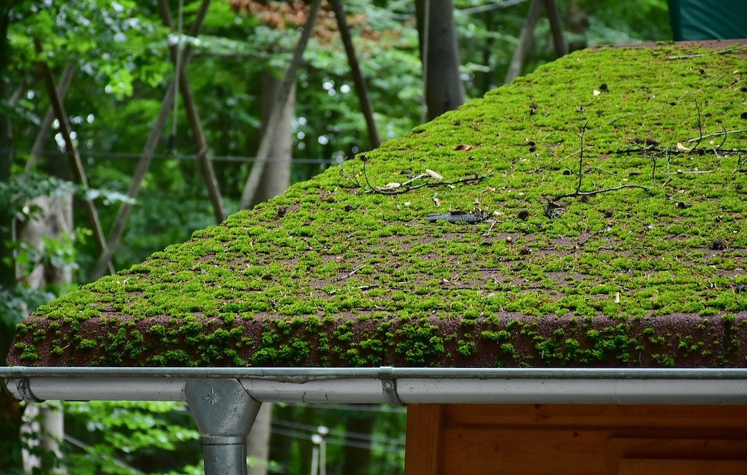 mossy_roof__freeman_roofing_4201_auckland_pace__fl_32571_(850)_994-1078__https-::g.page:pensacola-roof-repair?share.jpg