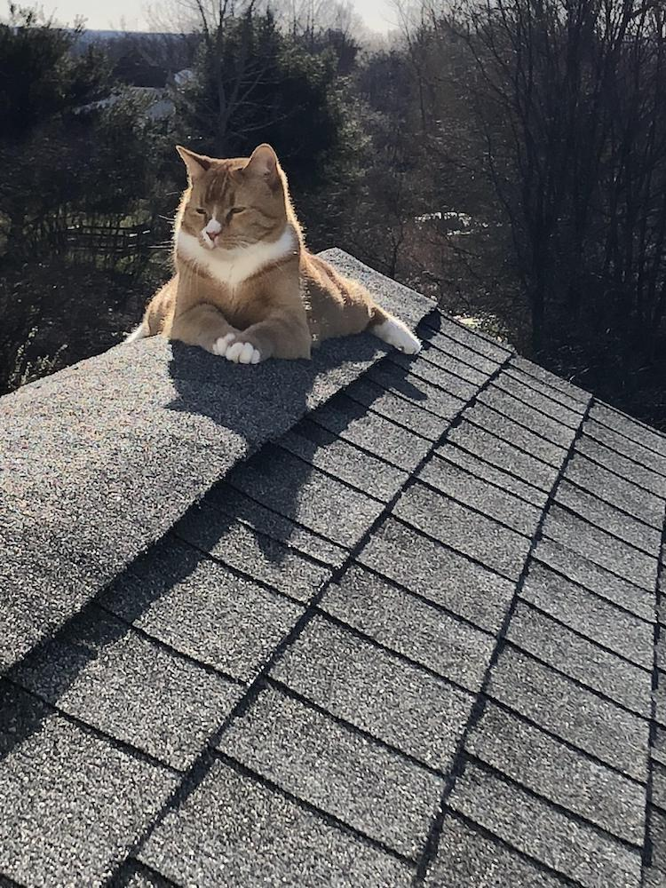 cat_on_the_roof__freeman_roofing_4201_auckland_pace__fl_32571_(850)_994-1078__https-::g.page:pensacola-roof-repair?share.jpg