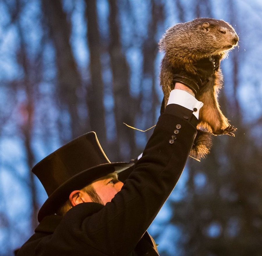 punxsutawney_phil__gutter_solutions_and_home_improvements_