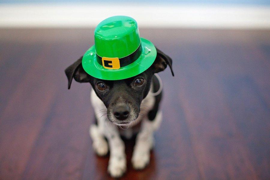 irish_puppy__gutter_solutions_and_home_improvements_https-::seamlessgutterspensacola.com:gutter-services:_(850)_776-1782.jpg