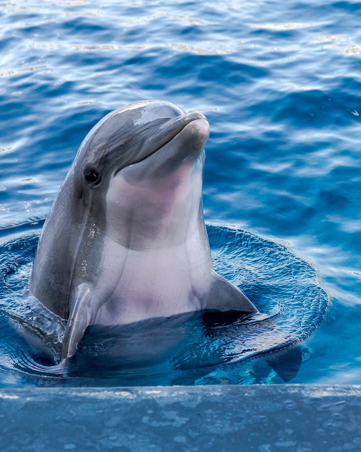 dolphin_day__freeman_roofing_4201_auckland_pace__fl_32571_(850)_994-1078__https-::freemanroofing.com.jpg