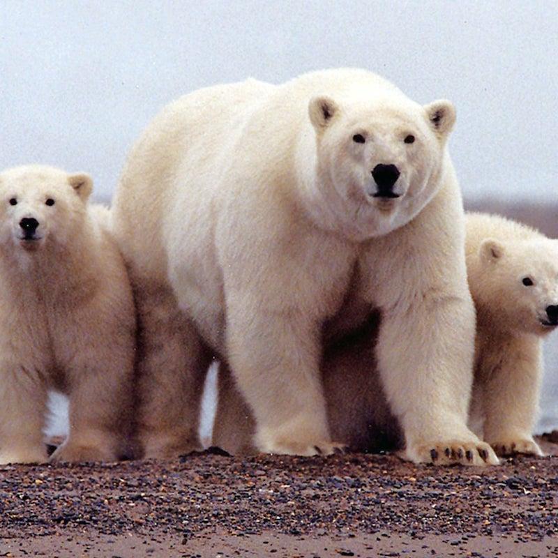polar_bears__comfort_air_cooling_&_heating__850-520-3139_https-::bit.ly:3bklrxx_.jpg