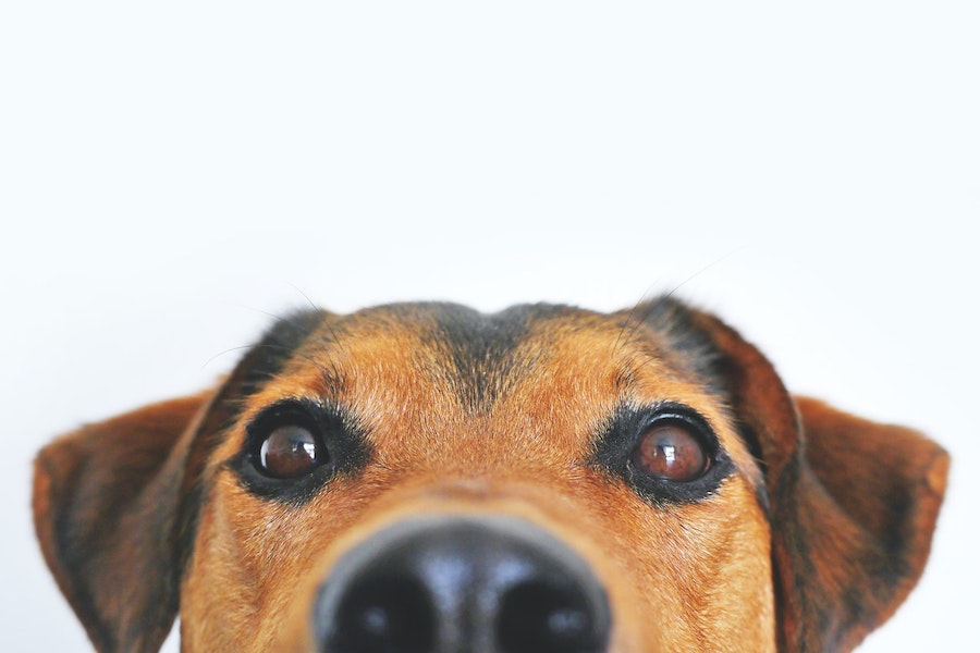 dog_at_work__gutter_solutions_and_home_improvements_https-::seamlessgutterspensacola.com:gutter-services:_(850)_776-1782.jpg