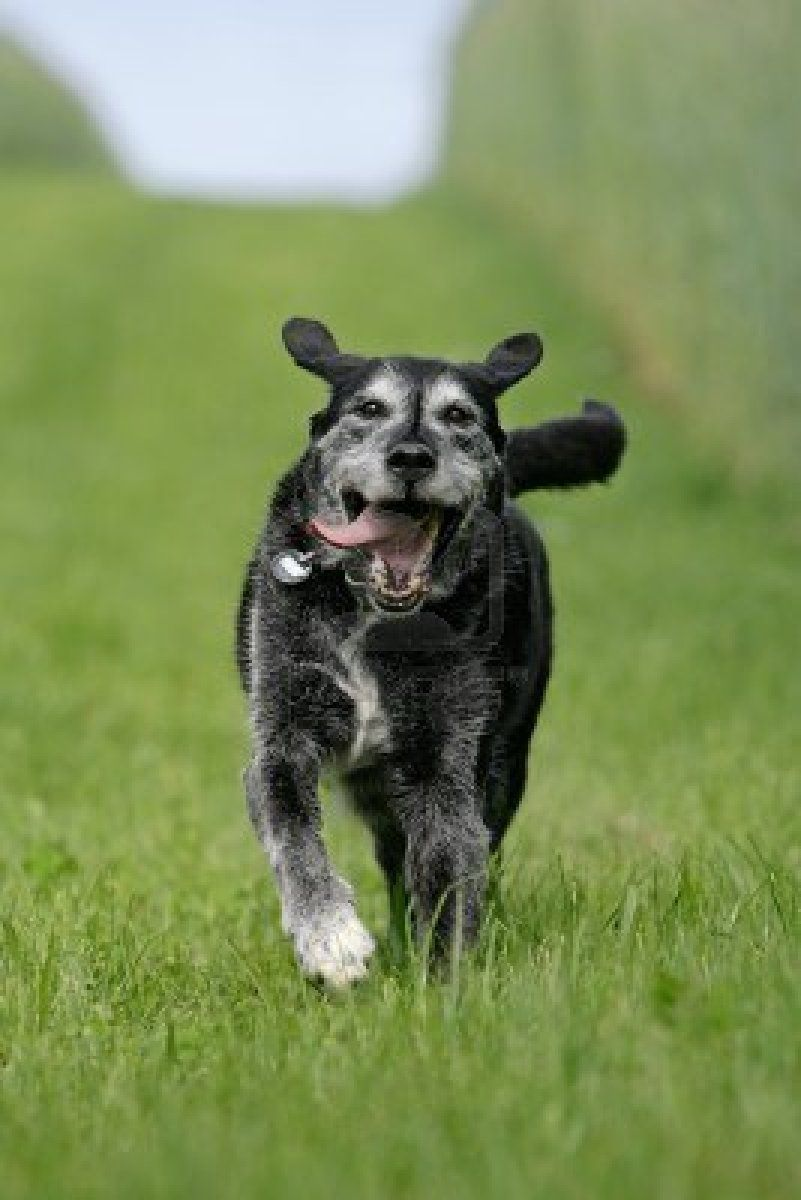 happy-old-dog.jpg