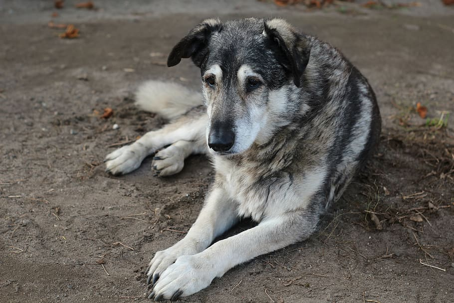dog-animal-hybrid-old-dog.jpg
